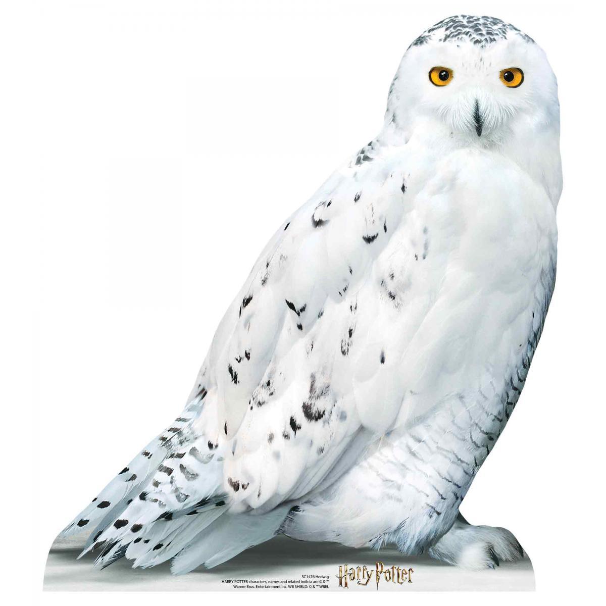 Star Cutouts Figurine en carton taille réelle Hedwige la chouette blanche vue de profil Film Harry Potter 74 CM