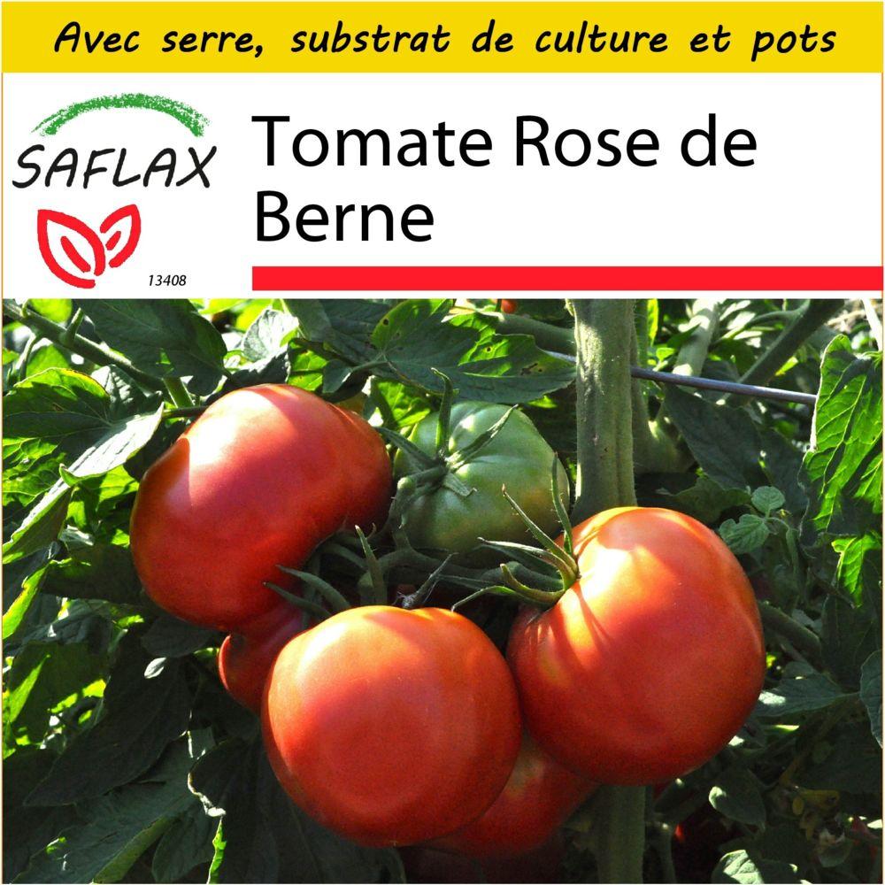 Saflax SAFLAX - Kit de culture - Tomate Rose de Berne - 10 graines - Avec mini-serre, substrat de culture et 2 pots - Lycopers
