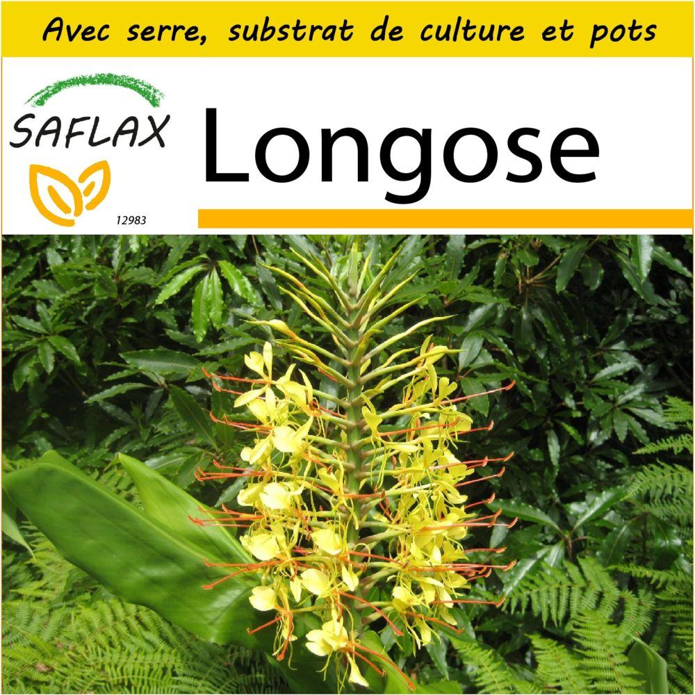 Saflax SAFLAX - Kit de culture - Longose - 10 graines - Avec mini-serre, substrat de culture et 2 pots - Hedychum gardnerianum