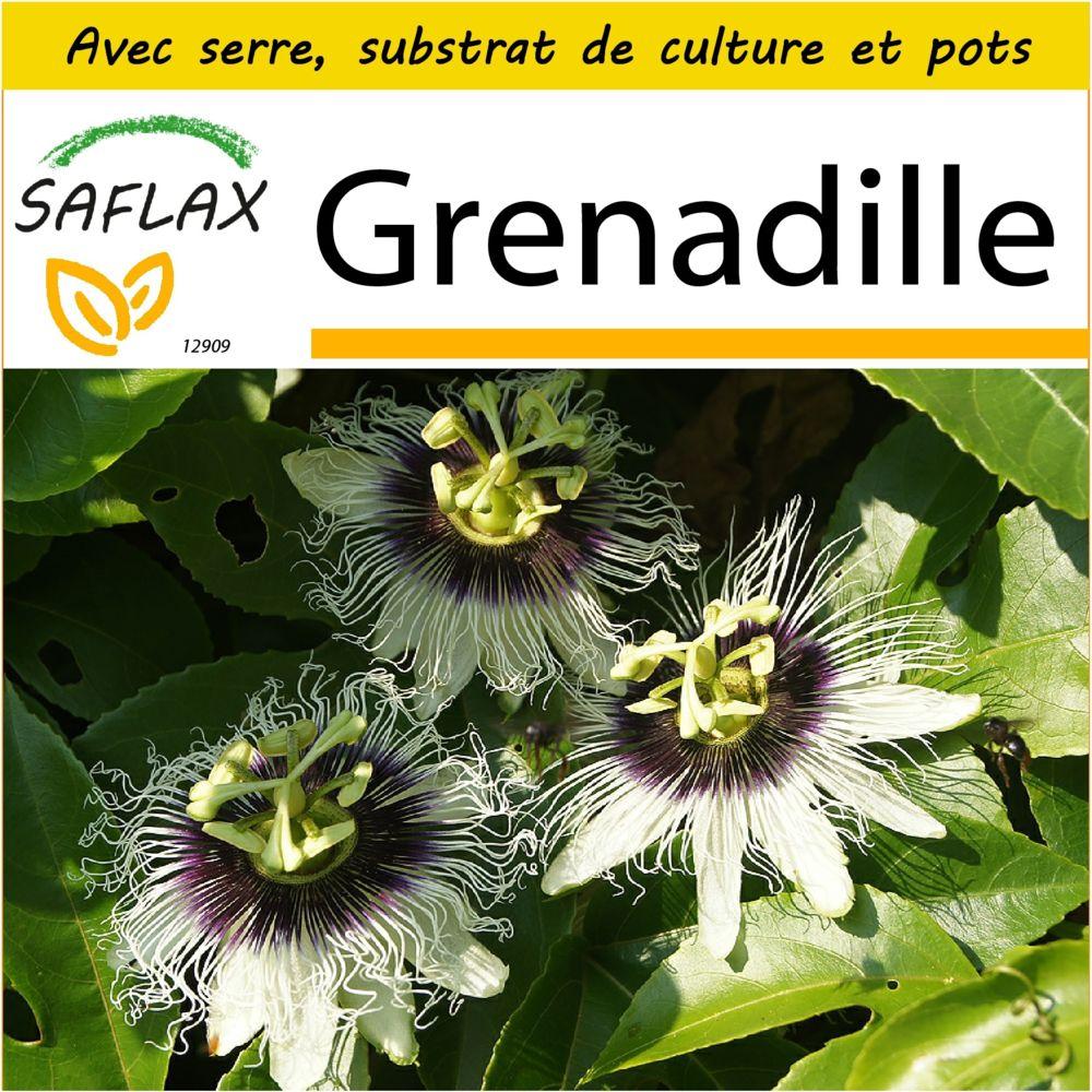 Saflax SAFLAX - Kit de culture - Grenadille - 40 graines - Avec mini-serre, substrat de culture et 2 pots - Passiflora edulis