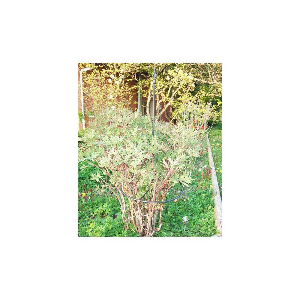 L'Héritier Du Temps Tuteur à Cerceau PM Réglable Treillis de Jardin Guide pour Fleurs Plantes Extérieur en Fer Forgé Gris Anthracite