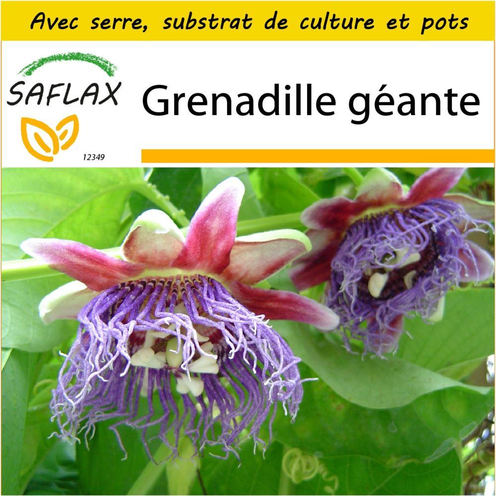 Saflax SAFLAX - Kit de culture - Grenadille géante - 12 graines - Avec mini-serre, substrat de culture et 2 pots - Passiflora