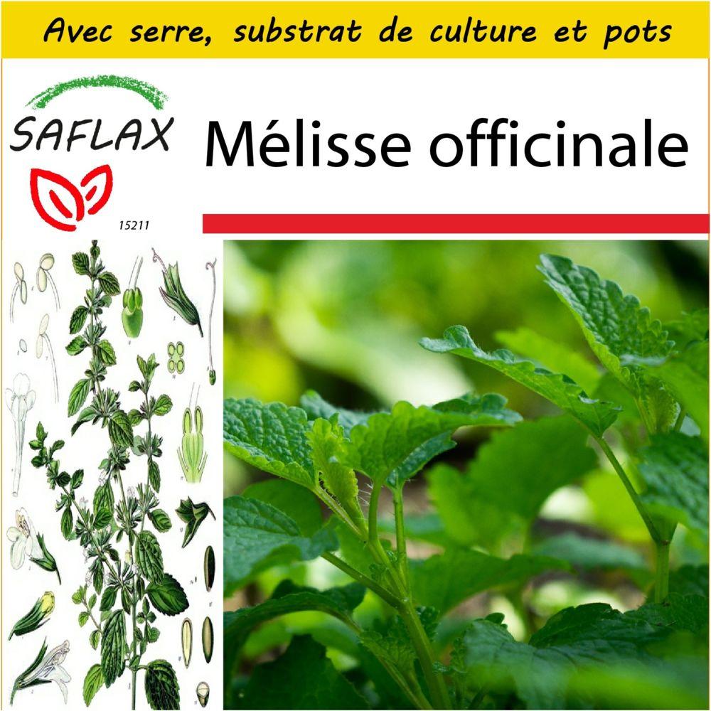 Saflax SAFLAX - Kit de culture - Mélisse officinale - 150 graines - Avec mini-serre, substrat de culture et 2 pots - Melissa o