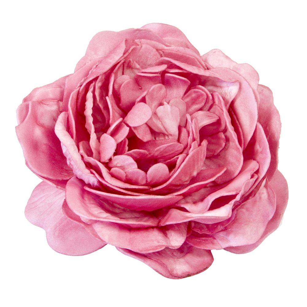 Visiodirect Lot de 12 Roses anciennes soft coloris fuchsia - 12 cm