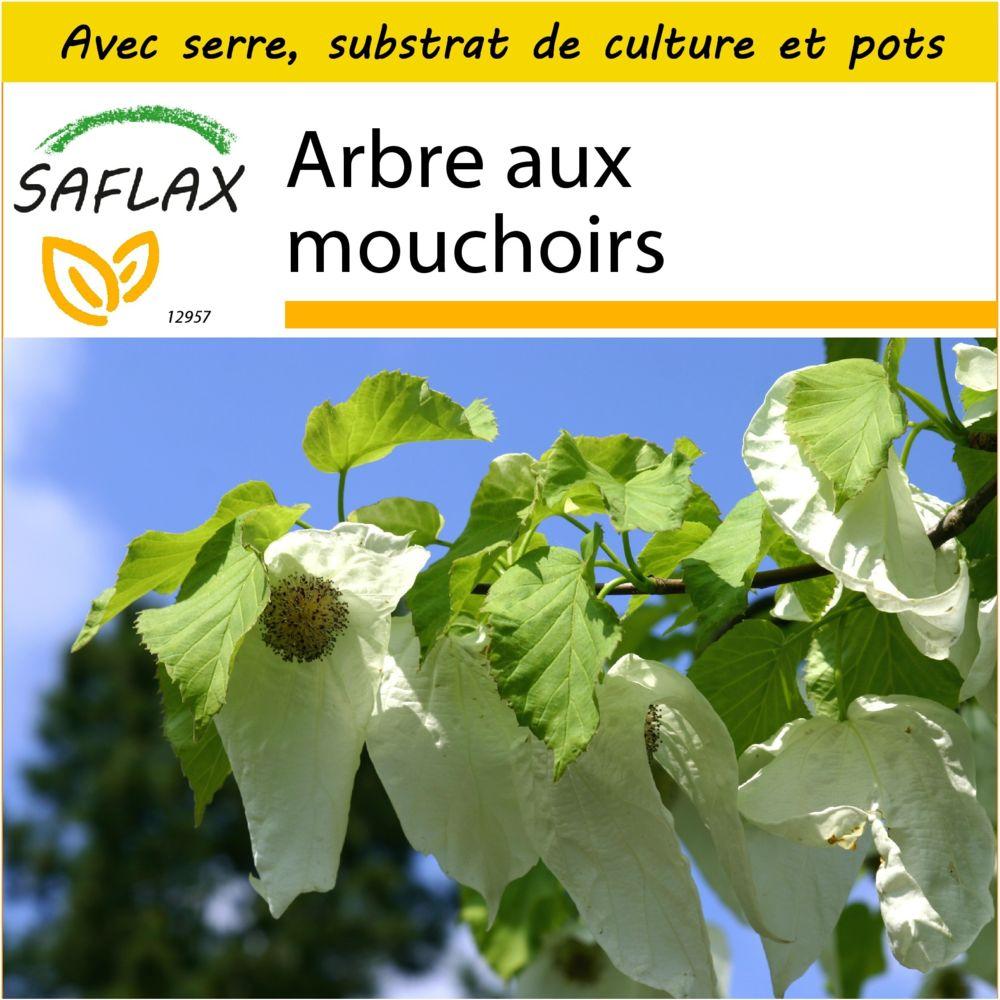 Saflax SAFLAX - Kit de culture - Arbre aux mouchoirs - 1 graines - Avec mini-serre, substrat de culture et 2 pots - Davidia in
