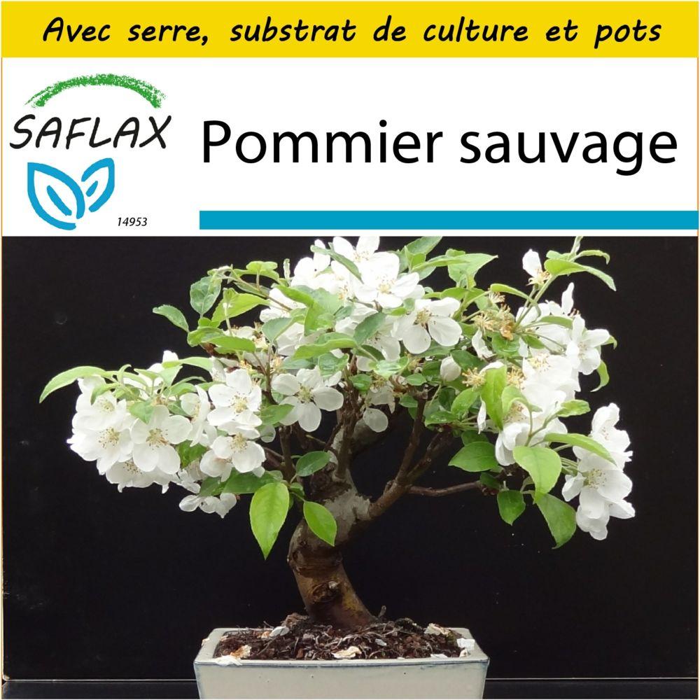 Saflax SAFLAX - Kit de culture - Pommier sauvage - 30 graines - Avec mini-serre, substrat de culture et 2 pots - Malus sylvest