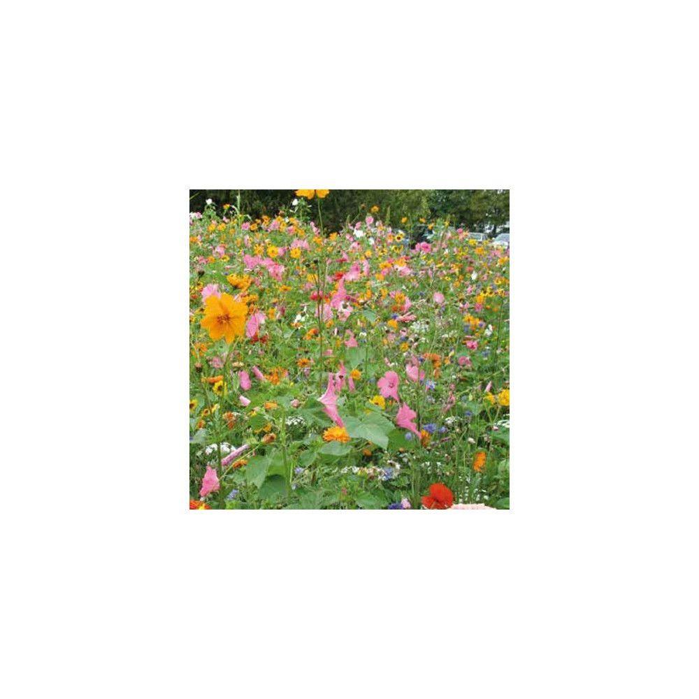 Sans Marque Mélange Prairie fleurie Elégance Sachet de 250 gr