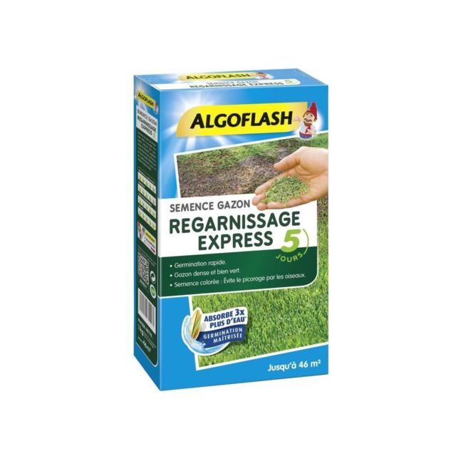Algoflash - ALGOFLASH Semences gazon regarnissage express - 1 Kg - Graine Fleur comestible