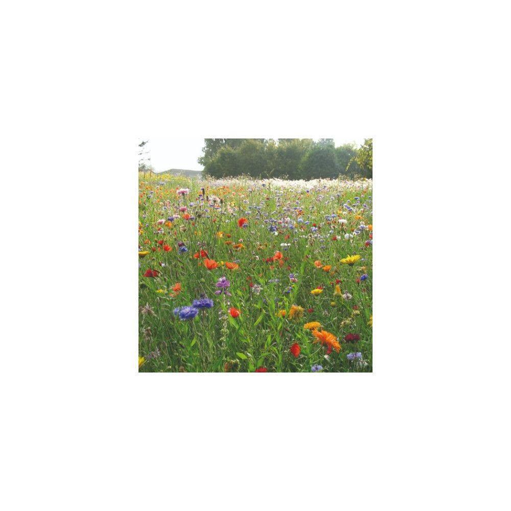 Sans Marque Mélange Prairie fleurie Champetre Sachet de 250 gr